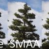 FC5 AA Comparison 2